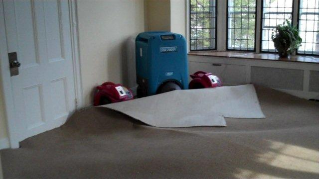 drying a wet carpet
